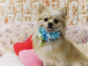 03468DD0-EA68-424D-844F-17DB457BAD58